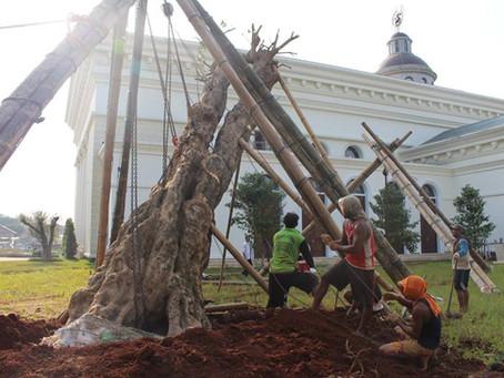 Pohon Pule di Gereja Anak Domba, ibarat Iman yang Kokoh