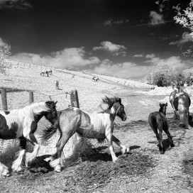 Infrared Photography: The Steps to Achieving Seriously Stunning Results