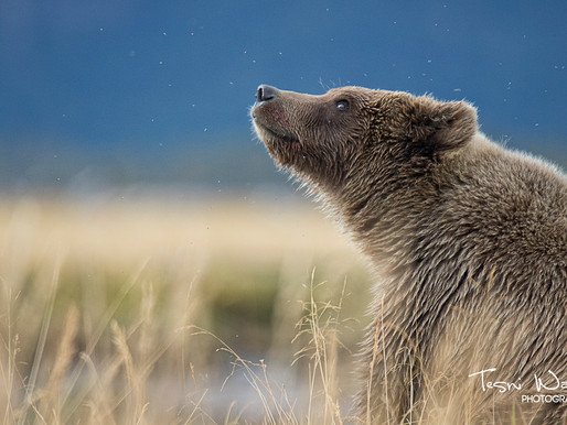 4 Top Tips for Wildlife Photography
