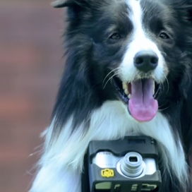 We've Already Seen Photography of Dogs, But Are We Ready To See Dog Photography!?
