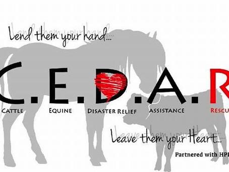 Equine Rescue Spotlight Series featuring C.E.D.A.R
