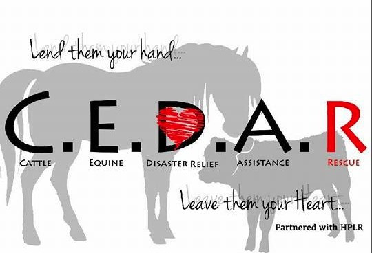 "C.E.D.A.R ""Lend them your hand, leave them your heart."""