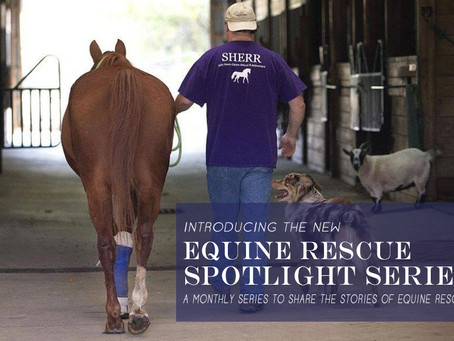 Equine Rescue Spotlight Series Debut with Safe Haven Equine Rescue and Retirement