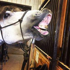 Smile! ~Teton :D