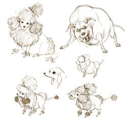 dog_concept