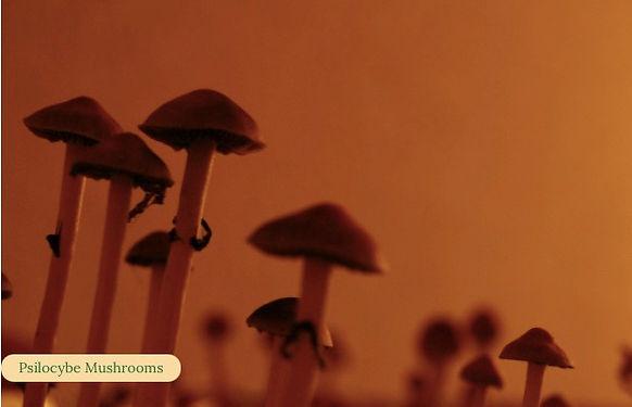 Mushrooms.jpeg