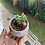 Thumbnail: Mini Crassula Perforata in Marble Pot