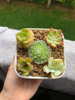 Five Spot Succulent Arrangement