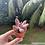 Thumbnail: Pachyphytum Ganzhou (potted)