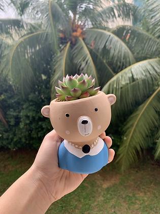Echeveria Moonstone in bear pot