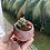 Thumbnail: Crassula Brevifolia in Marble Pot