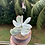 Thumbnail: Kalanchoe Thrysiflora (potted)