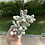 Thumbnail: Pachyphytum Vingstone cluster