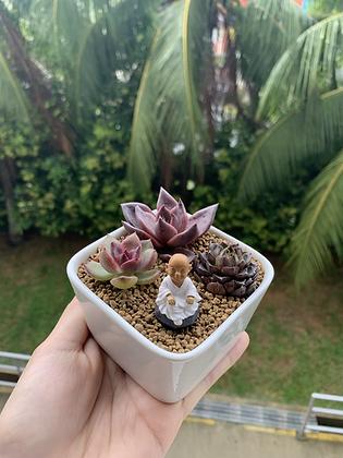 Succulent arrangement with monk