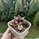 Thumbnail: Succulent arrangement with monk