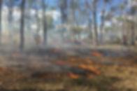Cultural Burn Image good .jpg