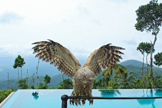 Experience pure nature and bird watching.