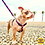 Thumbnail: Guia Vibes - Buddy Dog