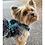 Thumbnail: Guia Amazonia - Buddy Dog