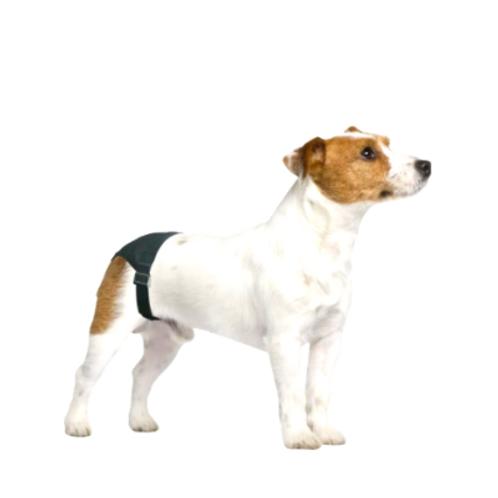 Calcinha Higiênica para Cachorro Pawise