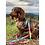 Thumbnail: Guia Pantone - Buddy Dog
