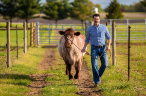 Dr. Renold Bleem leading a cow along a fence