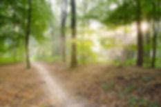dry-leaves-forest-leaves-41102_edit.jpg