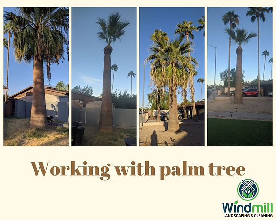 Working with palm tree.jpg