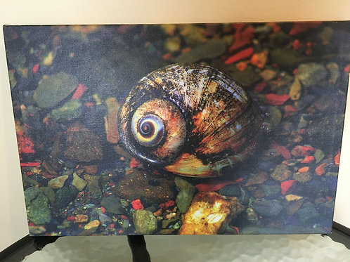 """""""Shelley the Snail""""  by Bud Vincent"""