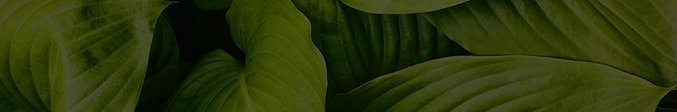 Banner_Home_DE_Benefits.jpg