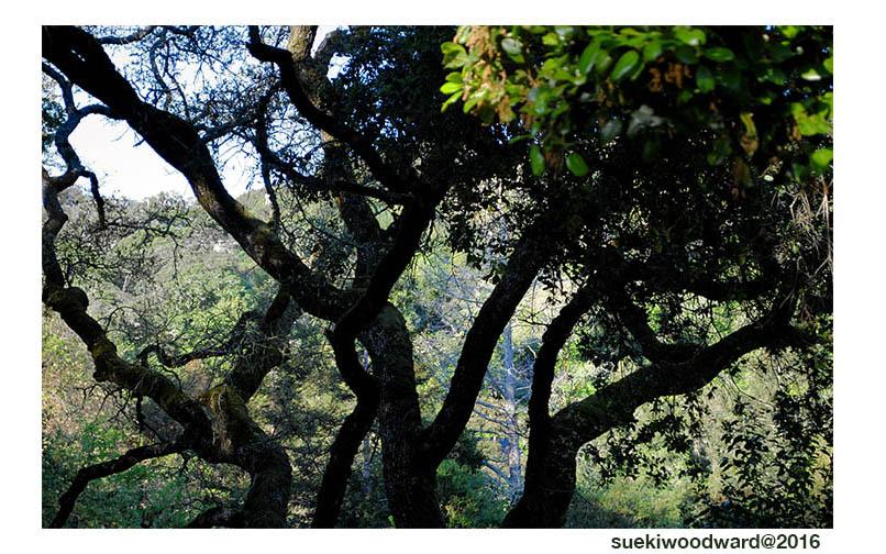 •W.treesshadowswwhte
