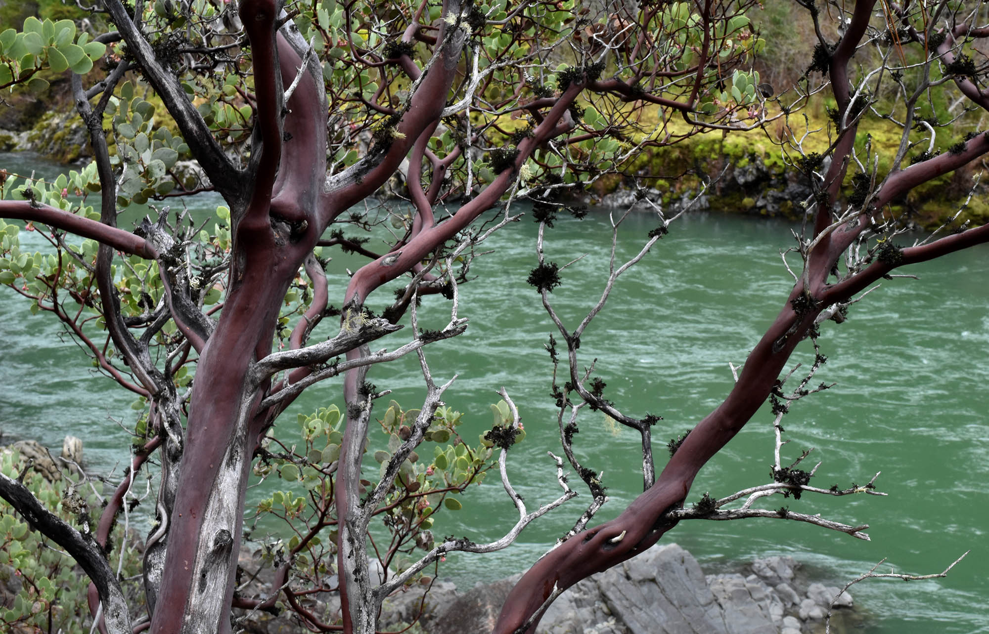 •_W_burgandytree_illinois_river_0188