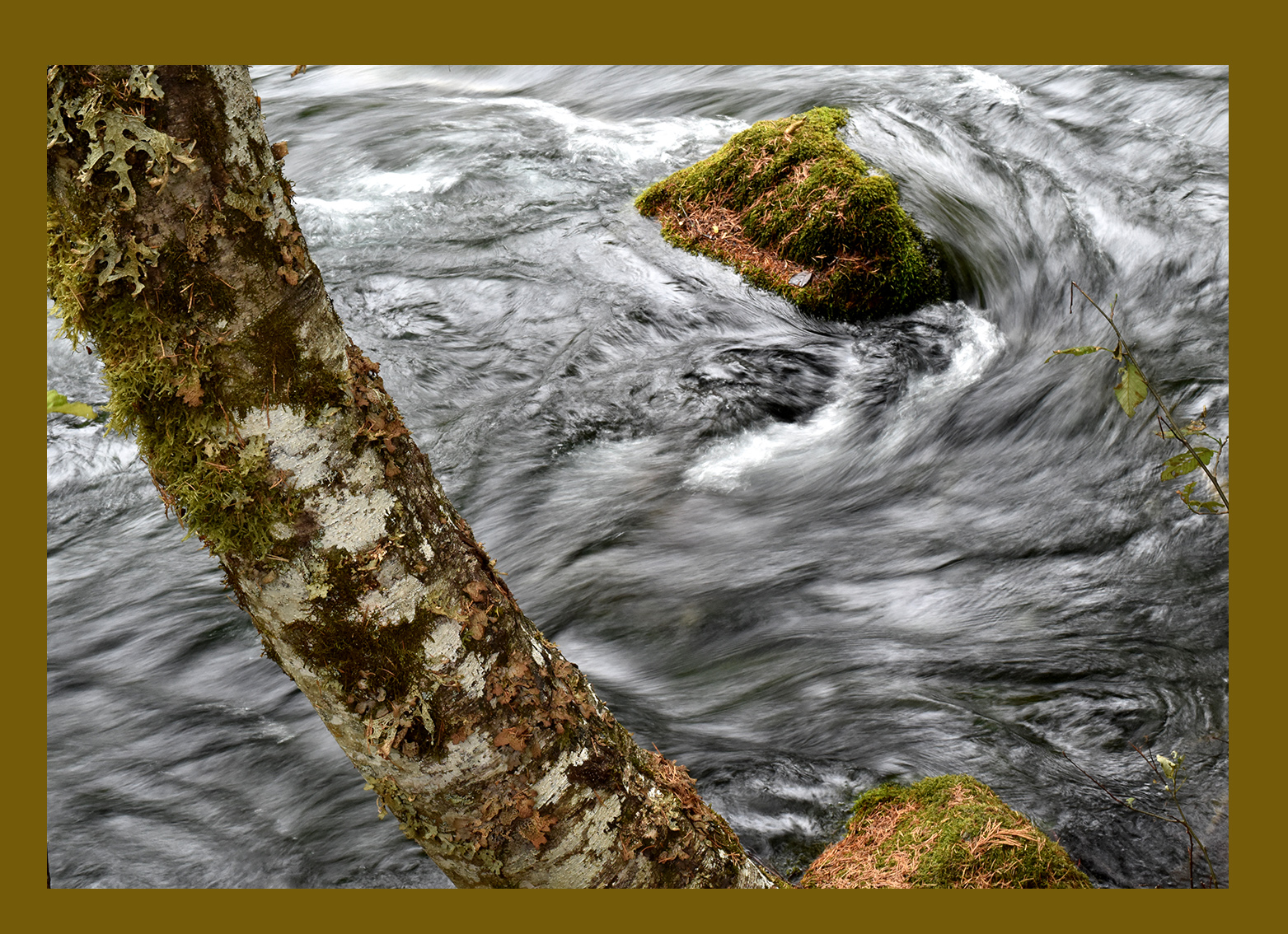 tree rock swirl_MacKenzie River