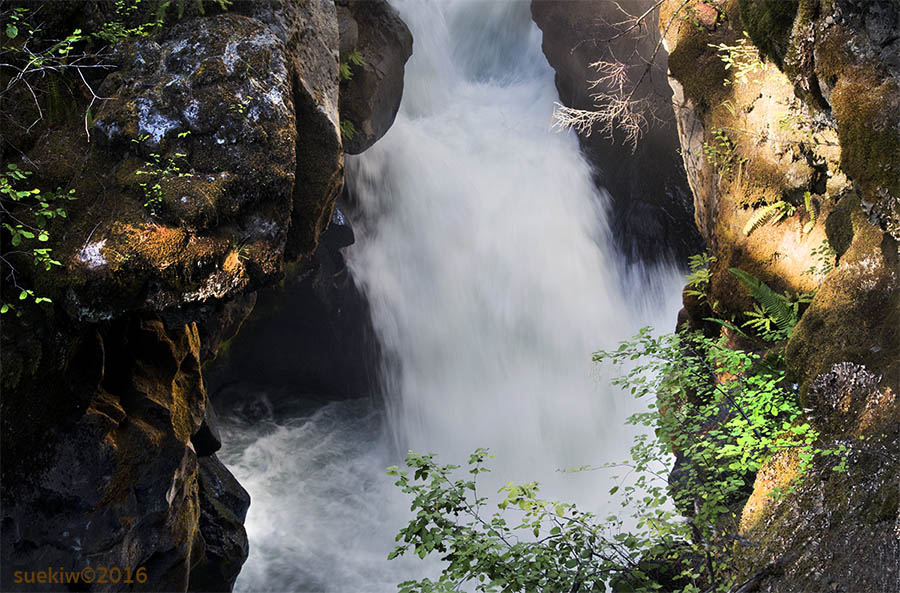 •_river_rogue gorge_