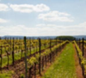 IMG_1753_Weinwanderung.jpg