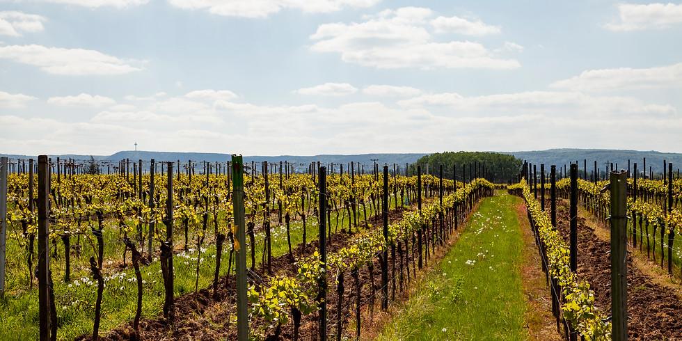 Weinwanderung Schwarzerde 2019
