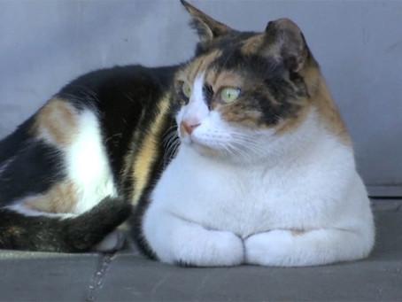 Train station cat Mitsi hits prime time news around the world