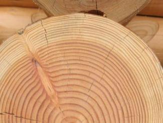 Le bois, une branche d'avenir...le reportage sur France 3