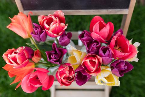 Tulips 21 (77 of 82).jpg