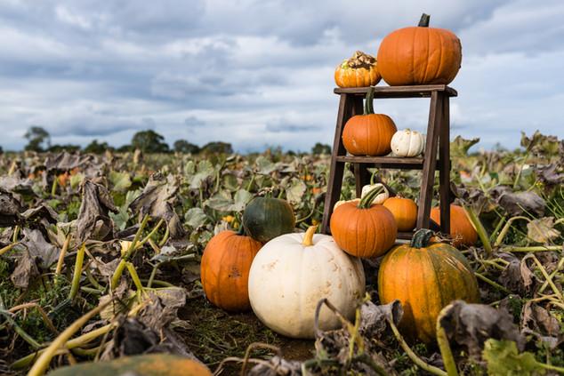 Pumpkins 2020 high resolution (34 of 66)