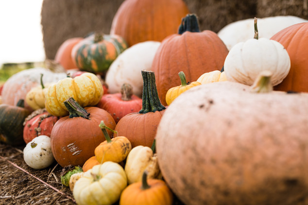 Pumpkins 2020 high resolution (56 of 66)