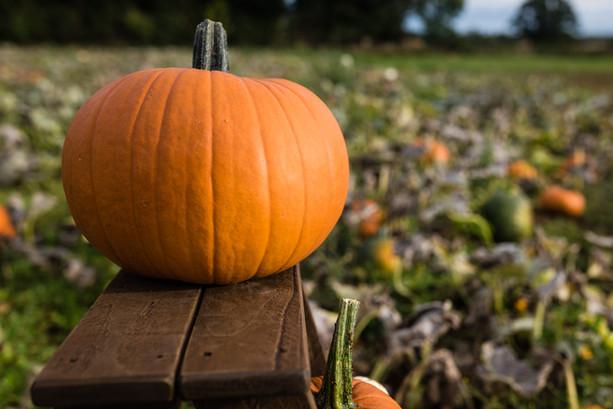 Pumpkins 2020 high resolution (29 of 66)