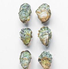 Kushi Oysters.JPG