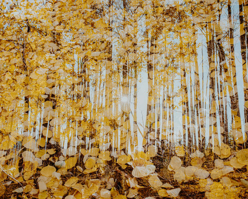 Fall Double Exposure