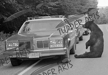 WATERMARK American Legion Bears - July 1