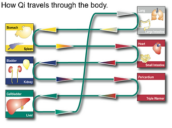 How Qi Travels through the Body.PNG