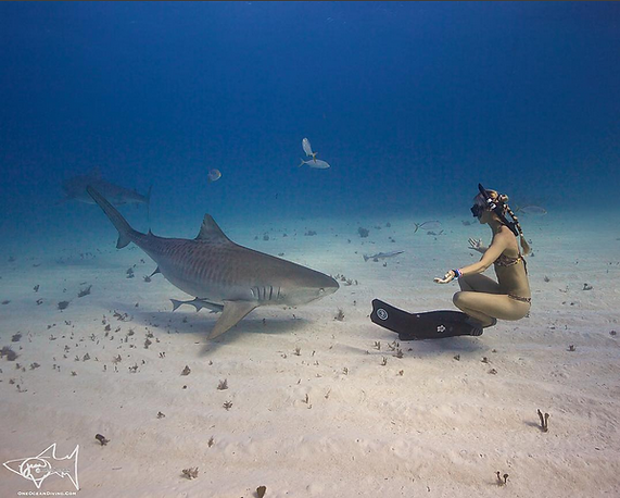 Ocean Ramsey, Shark, Conservation, Environment, Connection