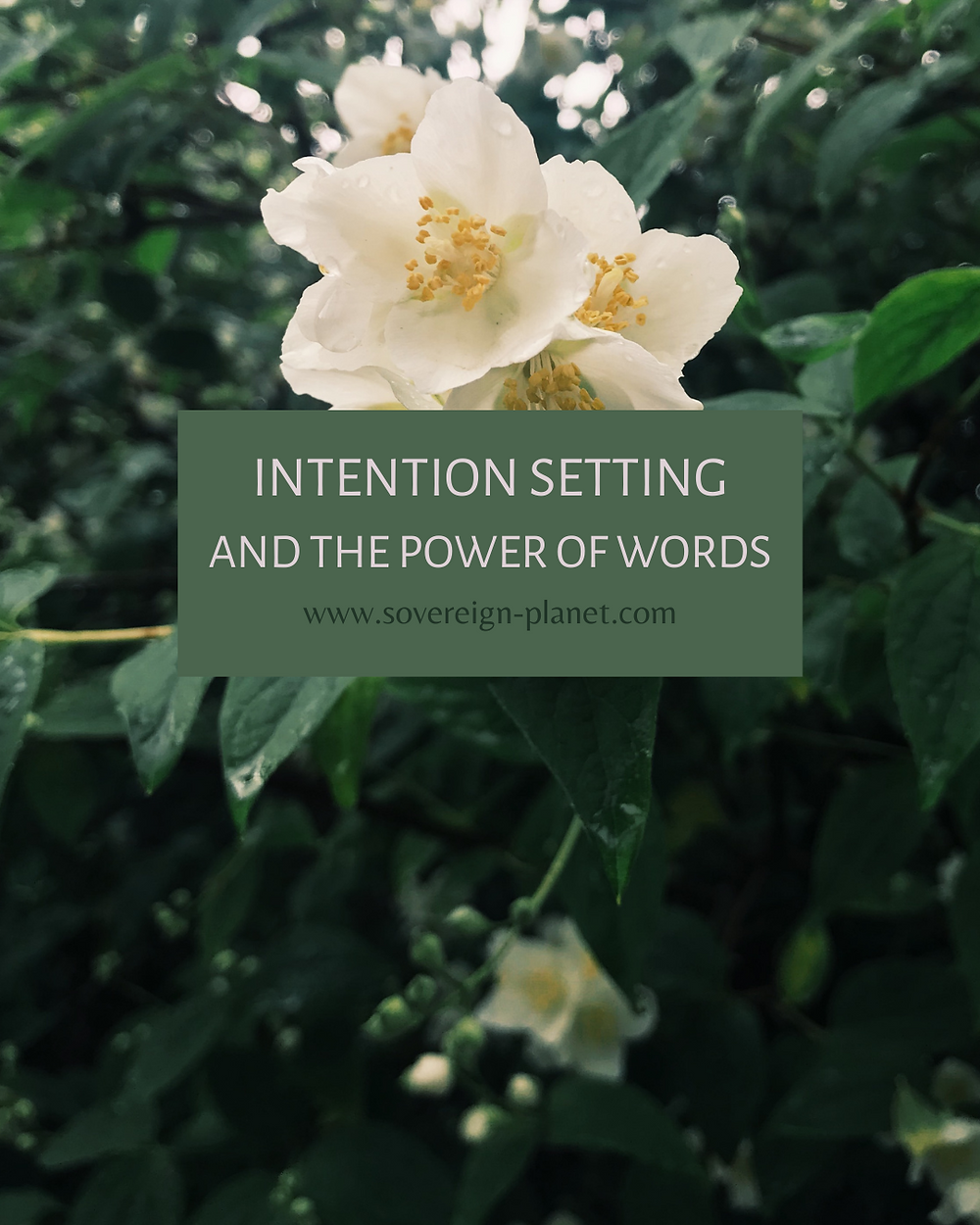 Intention Setting and the Power of Words