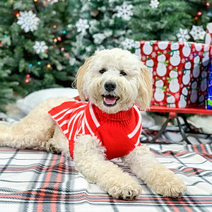 Zoey's Private Holiday Photo Session