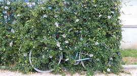 Le Vélo c'est écolo!